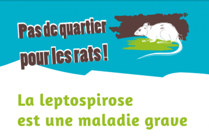 Visuel Leptospirose Mayotte Reunion